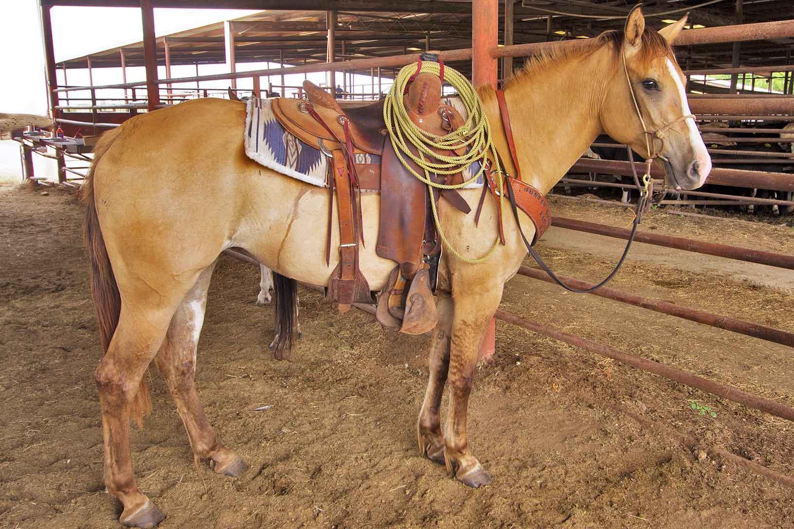 All saddled up