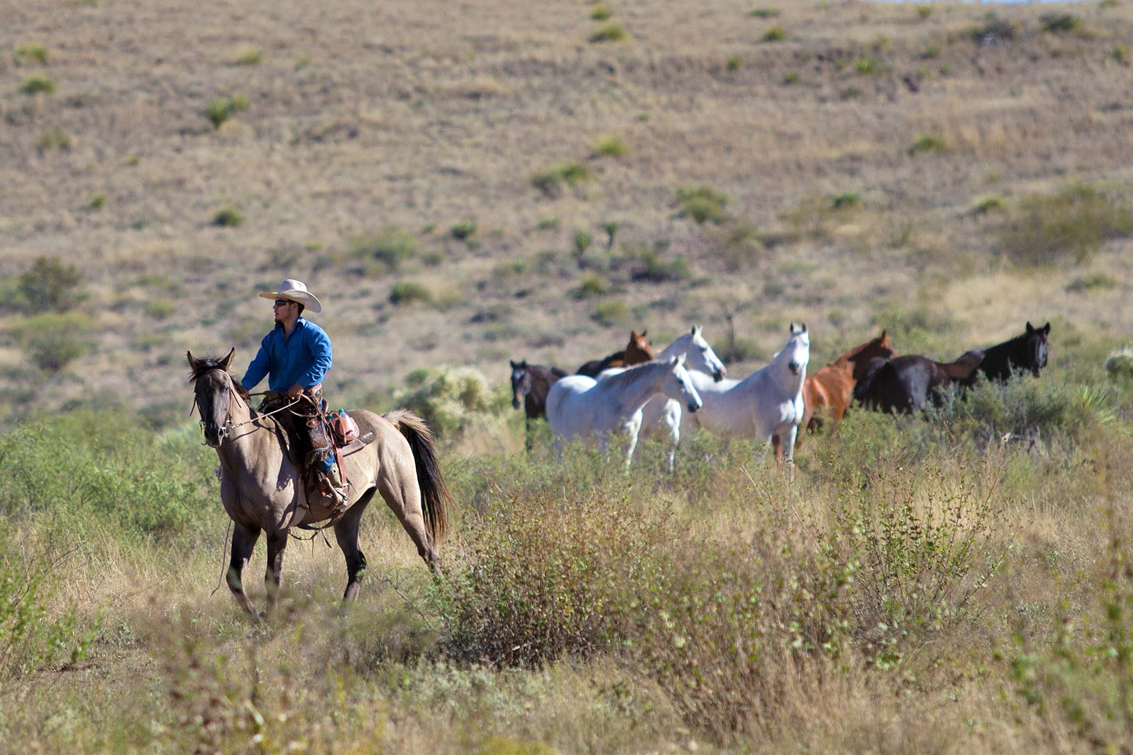 Rockafella and Luis moving horses to another pasture
