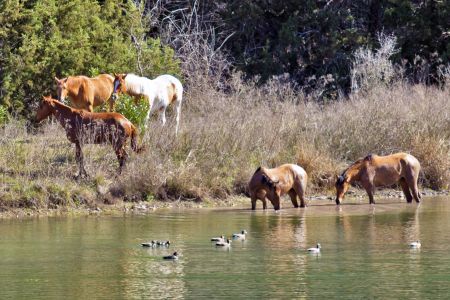 Horses & Ducks